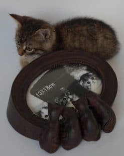 рамка для фтографии с котиками
