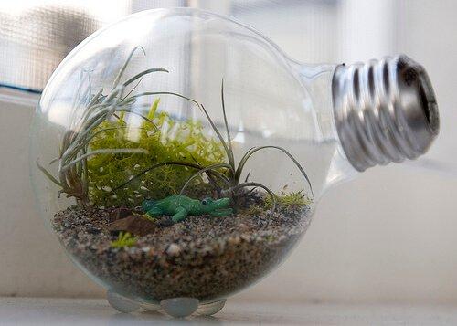флорариум из лампочки