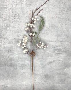 ветка с ягодами белая зимняя